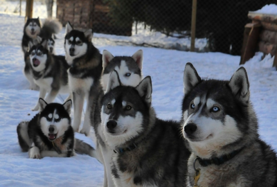 Lappland Husky Camp Woche mit Guide