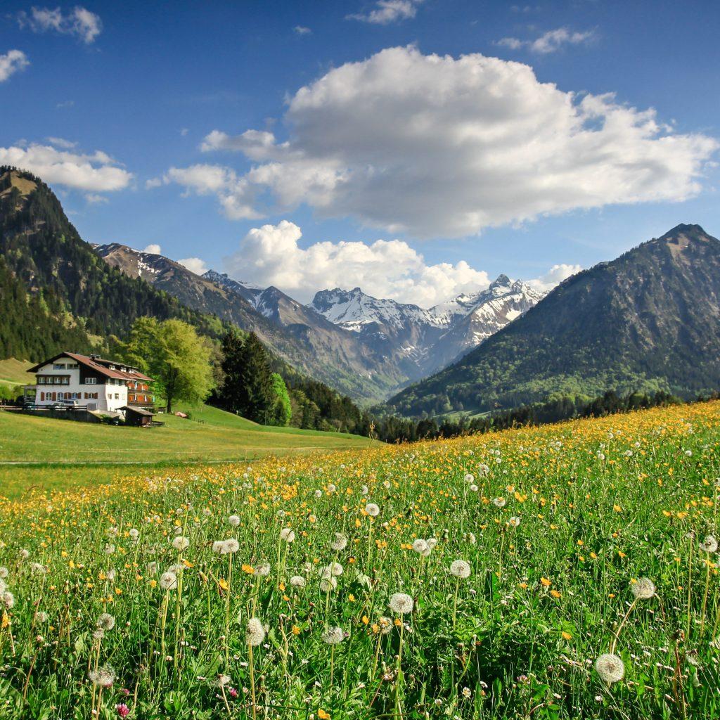 Blick auf ein Haus im Allgäu auf blühender Wiese
