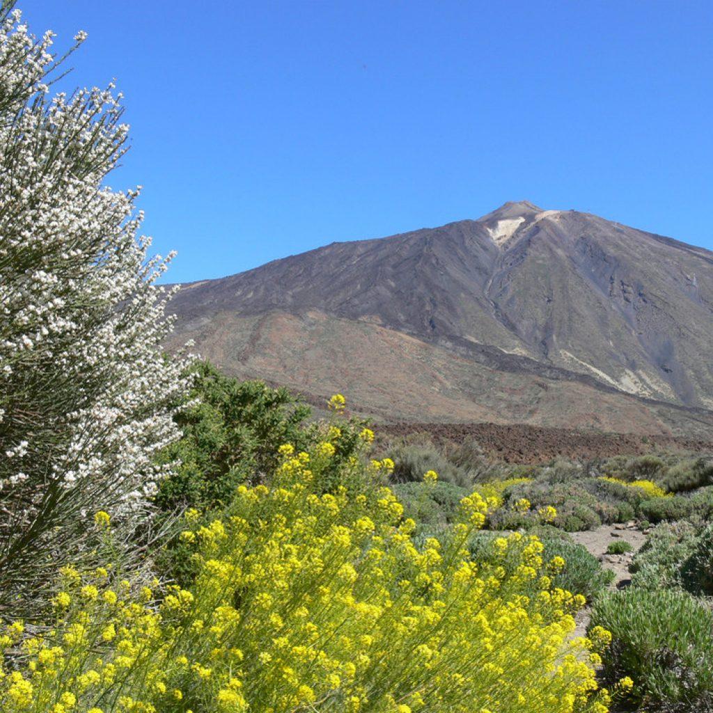 Blick auf den Teide, den höchsten Berg auf Teneriffa