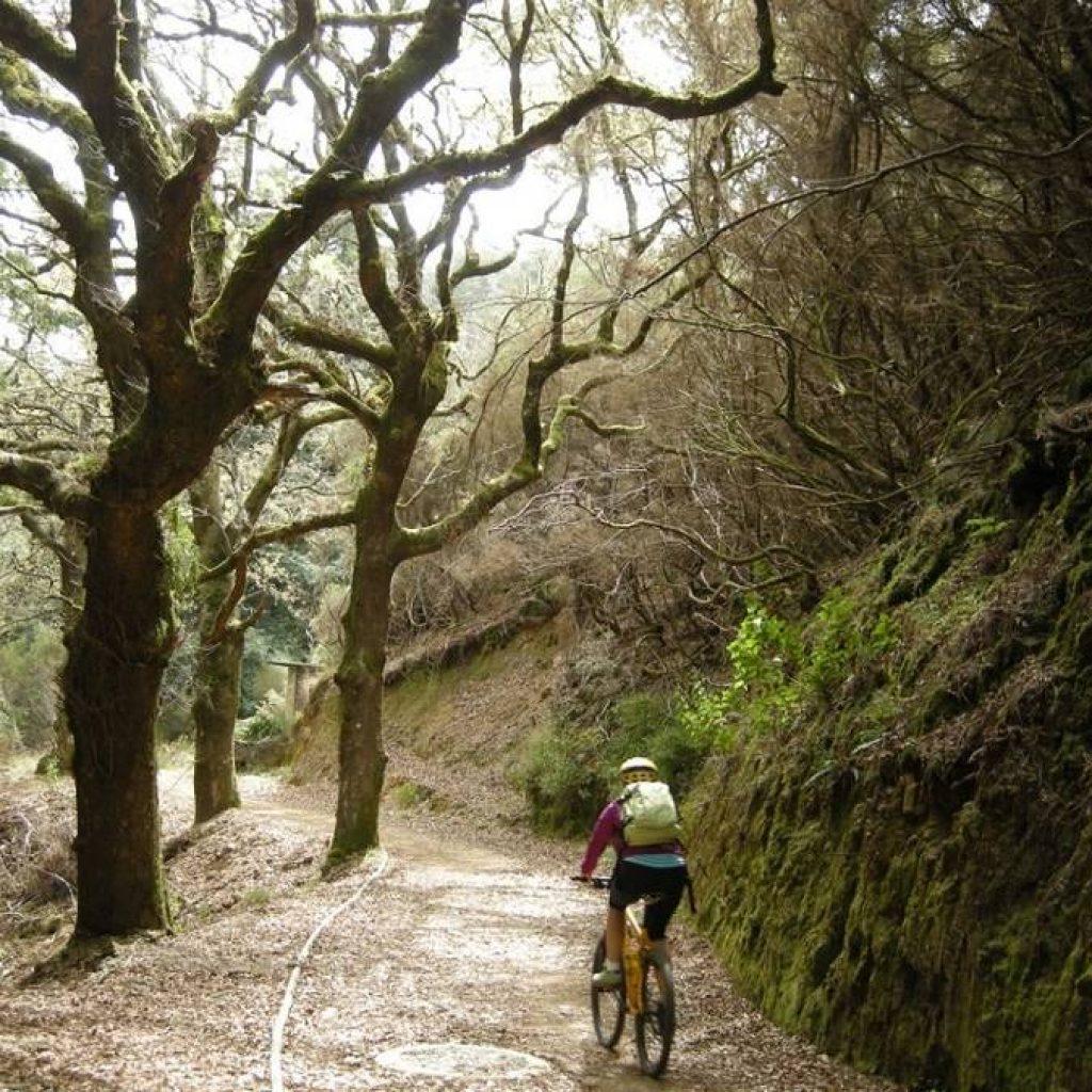 MTB Fahrer im Wald von Madeira
