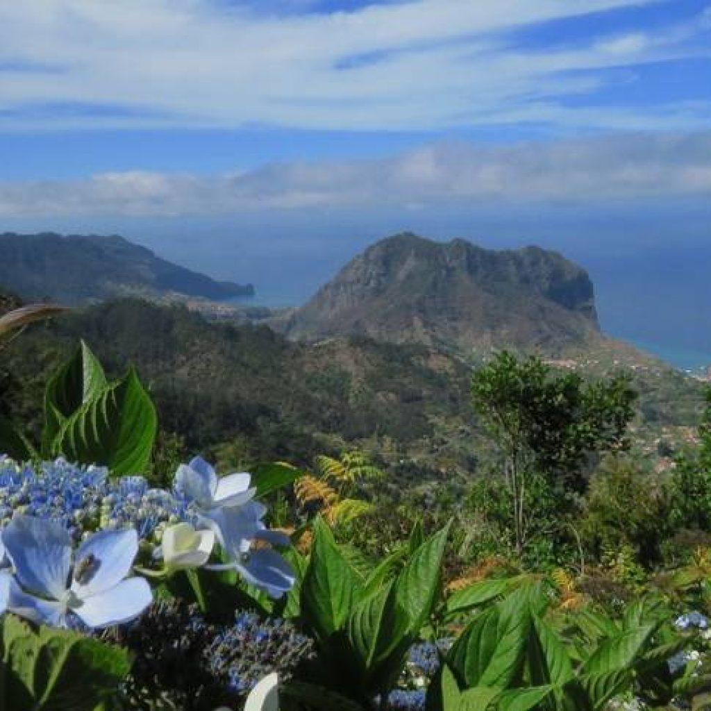 Hortensien vor Bergpanorama