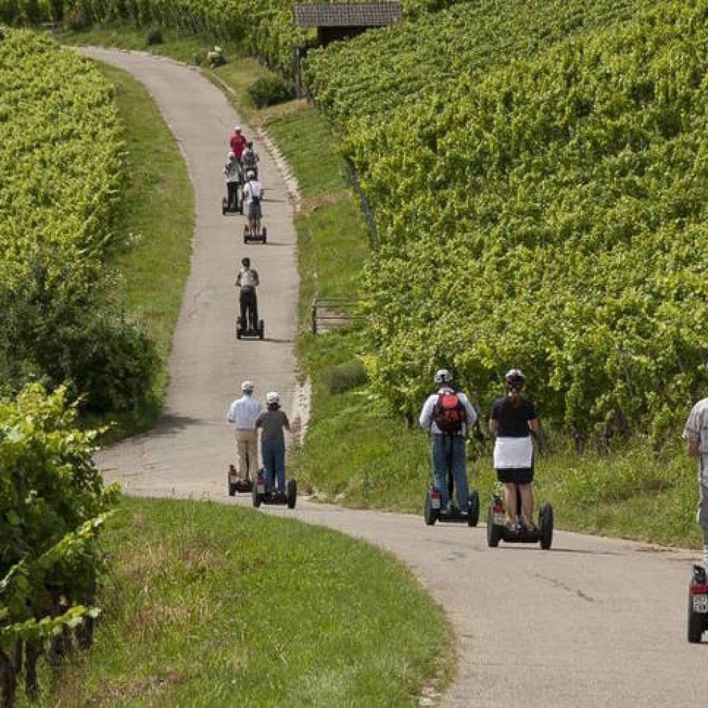 Segwayfahrer unterwegs in Weinbergen