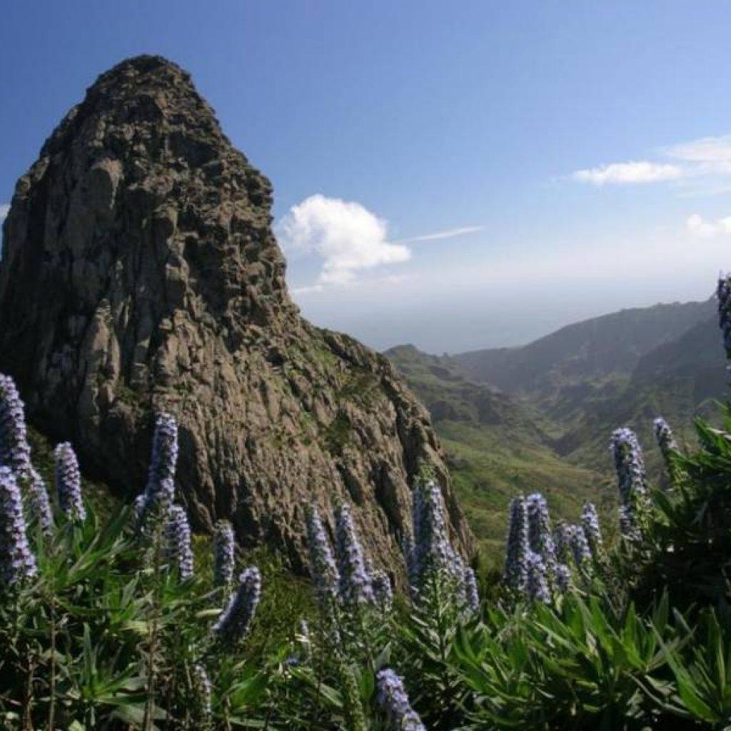 Blumen und Felsen auf Teneriffa