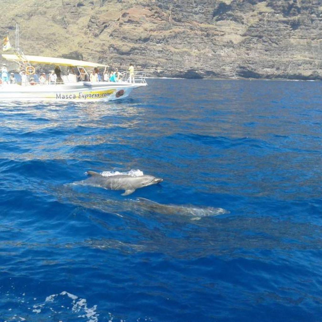 Boot mit Touristen und Delfinen