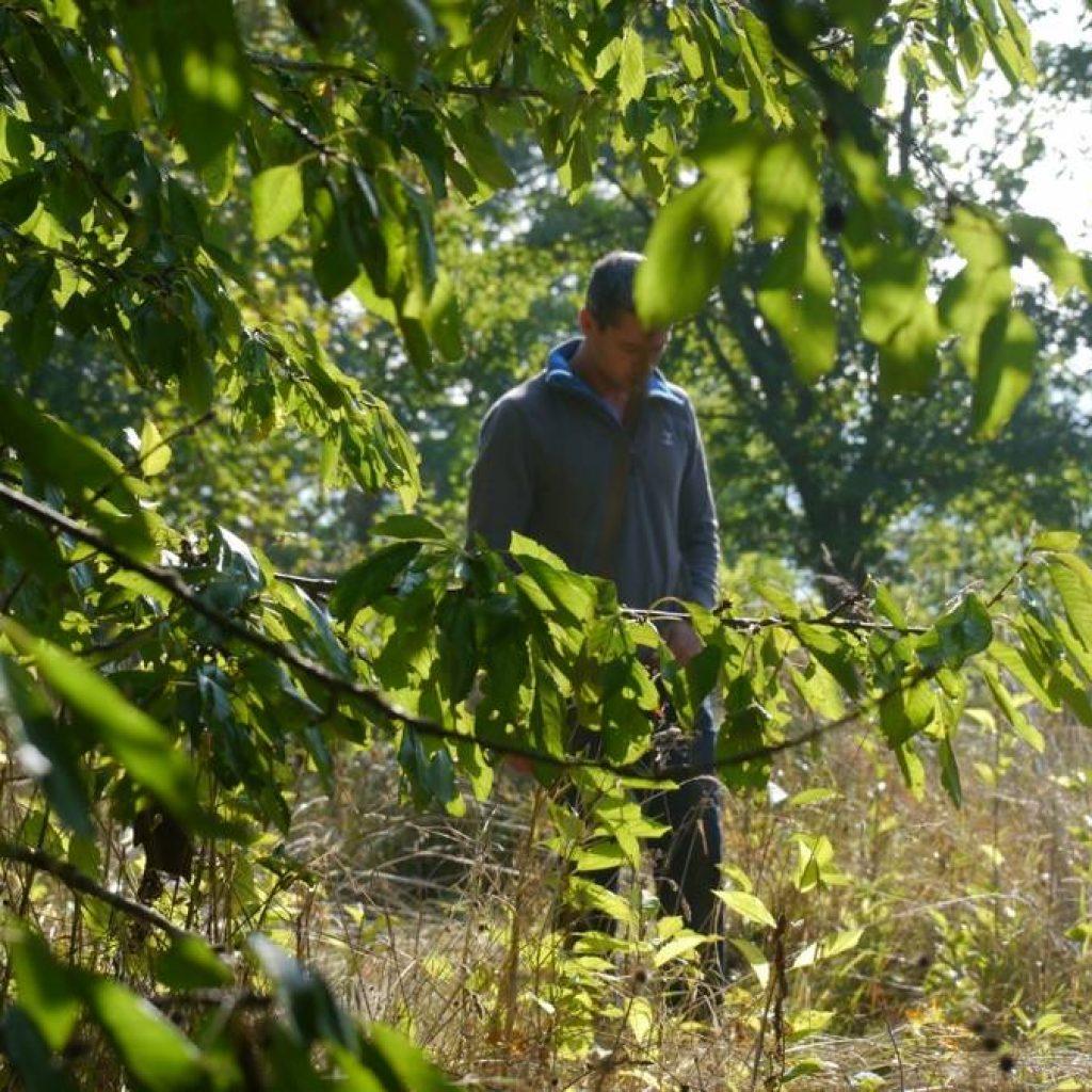 Mann hinter Zweigen im Wald