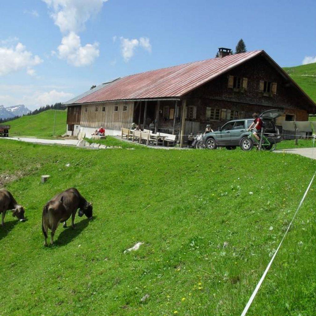 Hütte mit Kühen im Allgäu