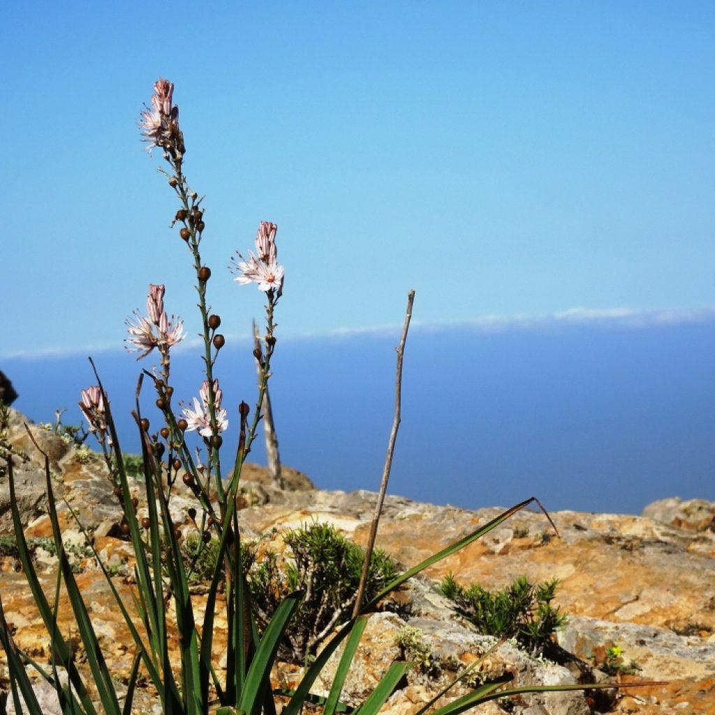 Strauch auf Fuerteventura