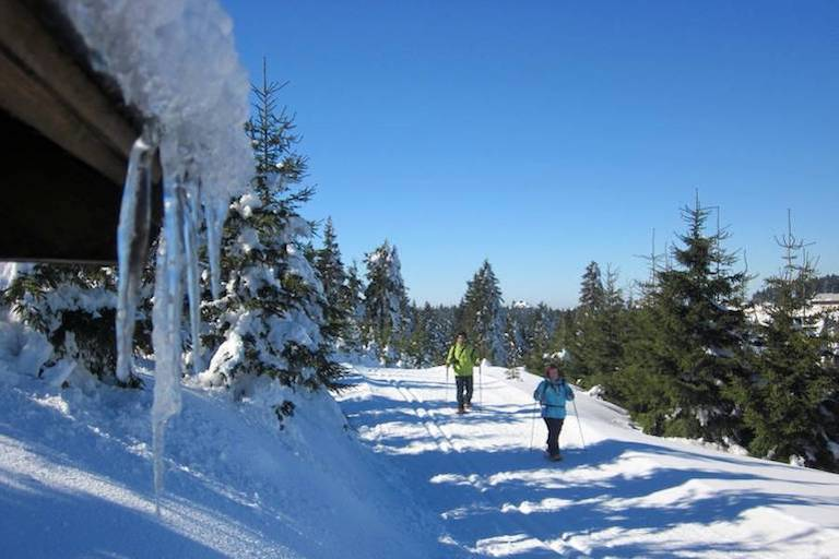Schneeschuhwanderer auf einem Weg im Wald