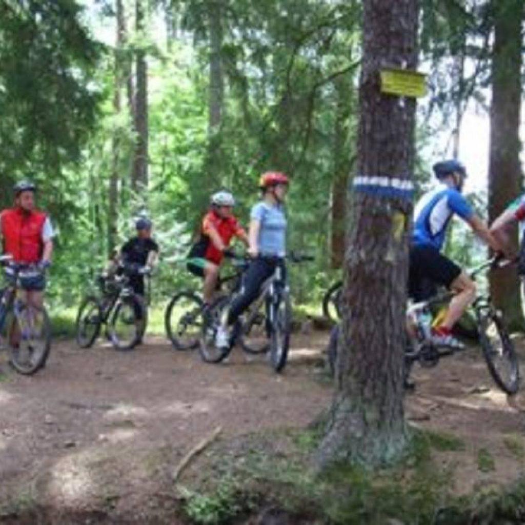 Mountainbiker im Wald